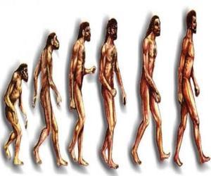 Układanka Kolejność ewolucji człowieka od australopiteka Lucy do współczesnego człowieka, przechodząc m.in. przez mężczyzn w Heidelbergu, Pekin, neandertalczyk i Cromagnon