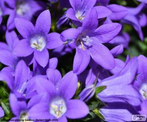 Układanka Kolor purpurowy