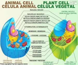 Układanka Komórki zwierząt i roślin