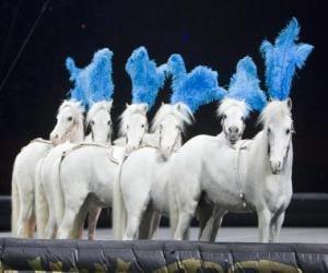 Układanka Konie działających w cyrku