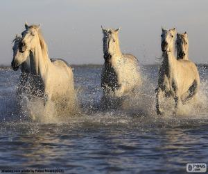 Układanka Konie w wodzie