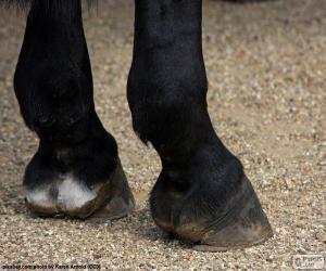 Układanka Kopyta konia