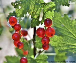 Układanka Koryncki winogron