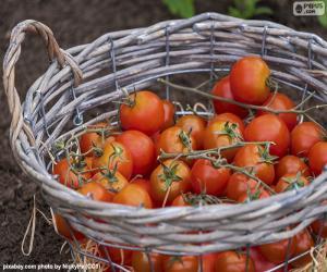 Układanka Kosz z pomidorów