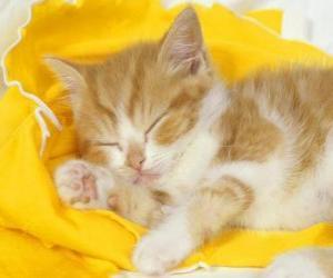 Układanka Kot śpi spokojnie