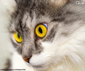 Układanka Kot żółte oczy