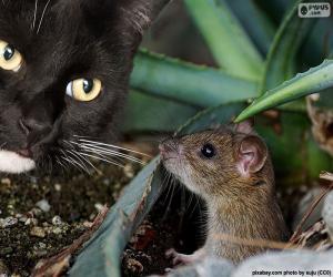 Układanka Kot i mysz