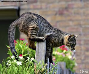 Układanka Kot na ogrodzenie