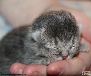Układanka Kot noworodka