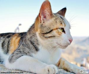 Układanka Kot, obserwując