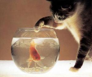 Układanka Kot oglądania ryb
