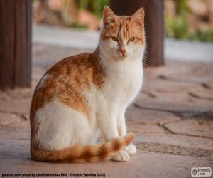 Układanka Kot siedzący