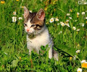 Układanka Kot w polu