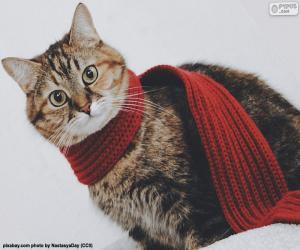 Układanka Kot w szaliku
