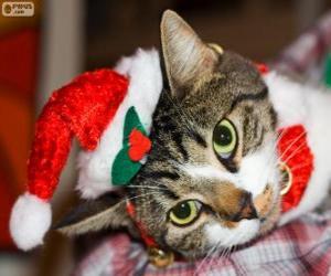 Układanka Kot z czapką Świętego Mikołaja