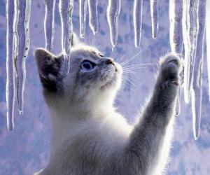 Układanka Kotek grać z lodu
