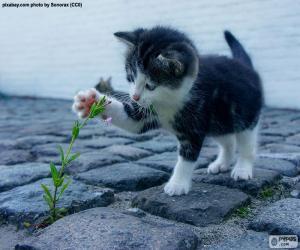 Układanka Kotek i roślin