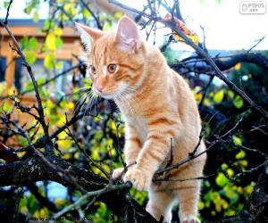 Układanka Kotek na drzewie