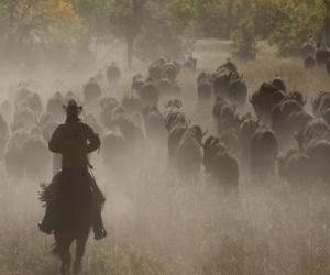 Układanka Kowboj prowadząc stado