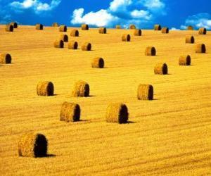 Układanka Krajobraz pole w lecie