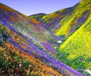 Układanka Krajobraz Wiosna