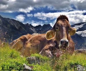Układanka Krowa odpoczynku