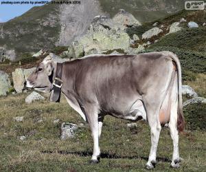 Układanka Krowa w wysokich górach