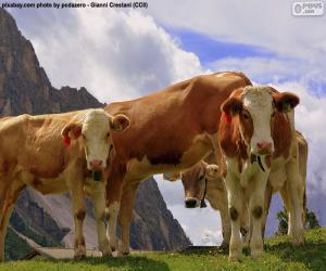 Układanka Krowy