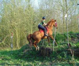 Układanka Kurs techniczny konne współzawodnictwo, testy zrozumienia między konia i jeźdźca za pomocą różnych testów.