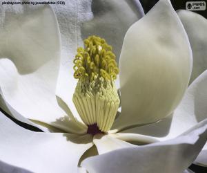 Układanka Kwiat Magnolii