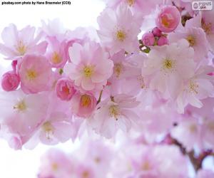 Układanka Kwiaty wiśni