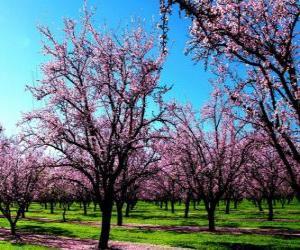 Układanka Kwitnienia migdałów drzew na wiosnę