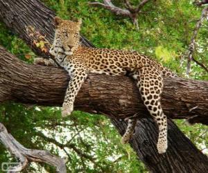 Układanka Lampart odpoczynku