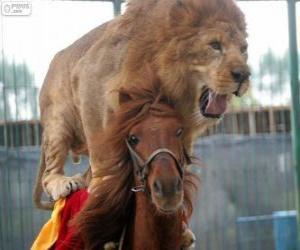 Układanka Lew i koń robi ich wydajność cyrk