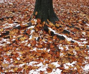 Układanka Liści i śniegu