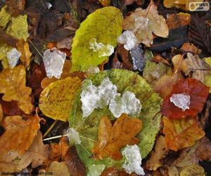Układanka Liści i lodu
