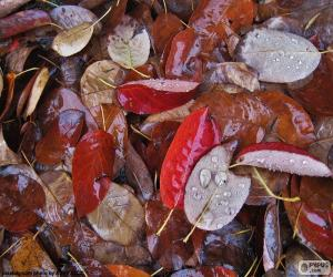 Układanka Liści jesienią na mokro