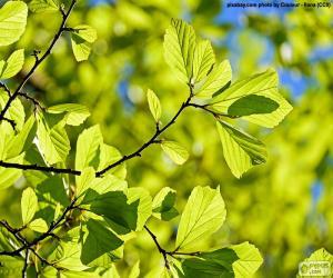 Układanka Liście drzewa