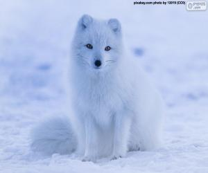 Układanka Lis polarny