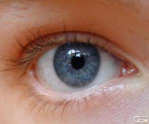 Układanka Ludzkiego oka