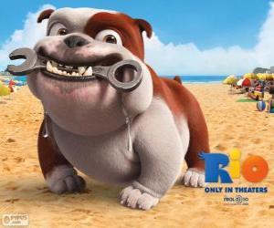 Układanka Luiz, bulldog