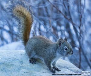 Układanka Mała wiewiórka pospolita