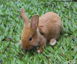 Układanka Małe Bunny