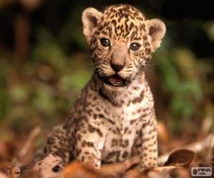 Układanka Małe jaguar