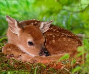 Układanka małych bambi
