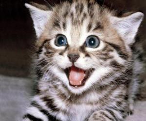 Układanka Mały kot