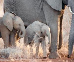 Układanka Mama kontrolowanie little słoń