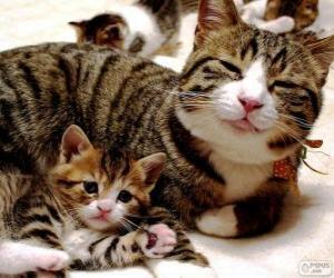 Układanka Mama kot z kotem dziecka