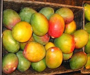 Układanka Mango