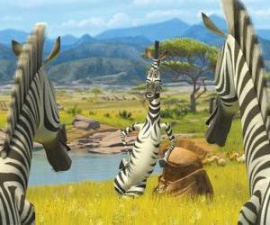 Układanka Marty mówi do innych zebry
